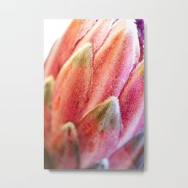 Protea Flower IV Metal Print