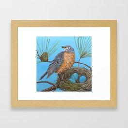 Robin with nest in Georgia pine tree Framed Art Print
