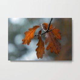 Rain Drop and Oak Leaves Metal Print