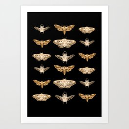 insects in gold - moths and beetles Art Print