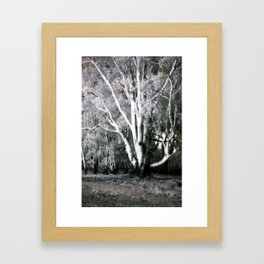 Old Man of the Forest Framed Art Print