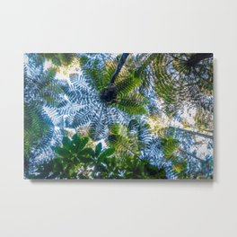 Giant ferns in redwood forest, Rotorua, New Zealand Metal Print