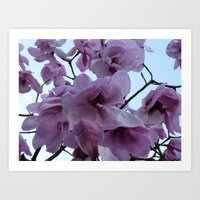 Magnolia In The Sky Art Print