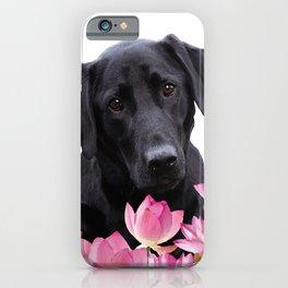 Labrador Retriever in Lotos Flower Field iPhone Case