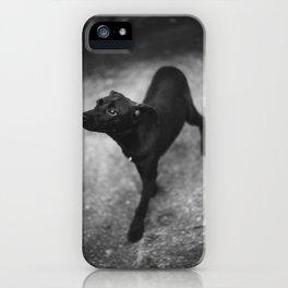 sniff iPhone Case
