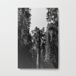 Sequoia National Park XII Metal Print