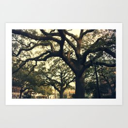 Savannah Live Oaks 2 Art Print