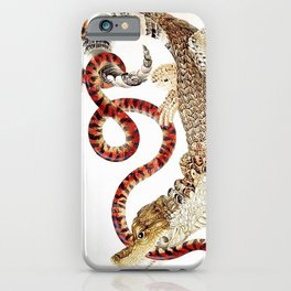 Spectacled Caiman and a False Coral Snake by Maria Sibylla Merian c.1705-10 // Wild Animals Decor iPhone Case