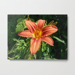 Tiger Lily Oringinal Metal Print