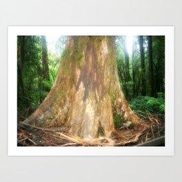 "Mountain Ash Tree (Aka ""The Big Boy"") Art Print"