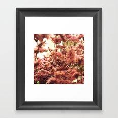 Cherry Blossoms 3 Framed Art Print