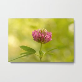 Red clover on green blur nature background #decor #society6 Metal Print