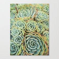 Succulentville Canvas Print