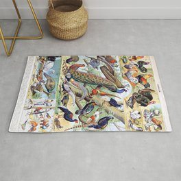 Adolphe Millot - Oiseaux C - French vintage poster Rug