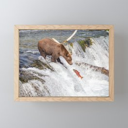 Grizzly bear face to face with salmon Framed Mini Art Print