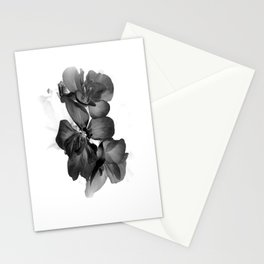 Black Geranium in White Stationery Cards