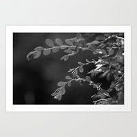 A Random Ass Plant In Black And White Art Print