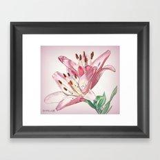 Rosella's Dream Framed Art Print