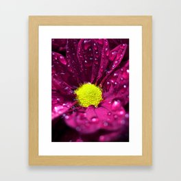 purple bloom II Framed Art Print