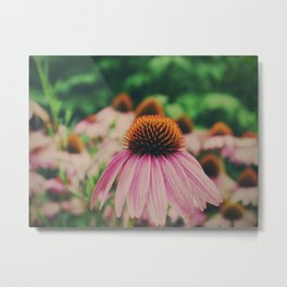 Purple Coneflower plant Metal Print