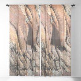 Eucalyptus tree bark texture Sheer Curtain