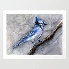 Blue Jay Watercolor Bird Art Print