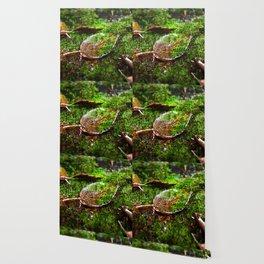 # 330 Wallpaper