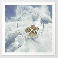 Winter Flower Art Print