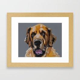 St Bernard Sweet Pup Framed Art Print
