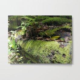 Rainforest Ferns & Moss Metal Print