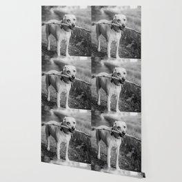 Fetch (Black and White) Wallpaper