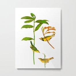 Hooded Warbler Bird Metal Print