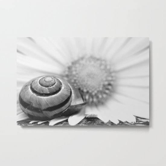 The snail on the flower Metal Print