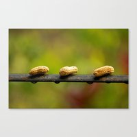 peanuts Canvas Prints featuring Peanuts by lenomadecom
