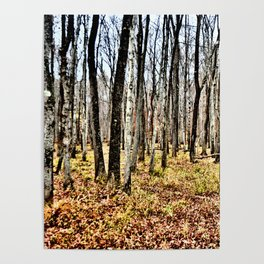 Fall in the Woods Poster