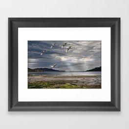 Swans on a Scottish Loch Framed Art Print