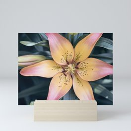 Lily Flower Photography, Pink Peach Lilies Flowers, Nature Botanical Photography Mini Art Print