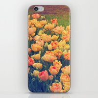tulips iPhone & iPod Skins featuring Tulips  by Juliana RW