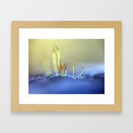 Capillary thread-moss 305 Framed Art Print