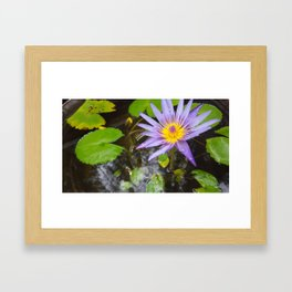 Enchanting Lotus Framed Art Print