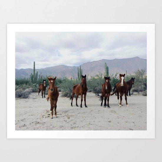 Bahía de los Ángeles Wild Horses Art Print