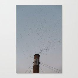 Chapman School Swifts in Portland, Oregon Canvas Print