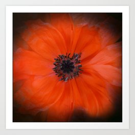 Poppy Square Art Print