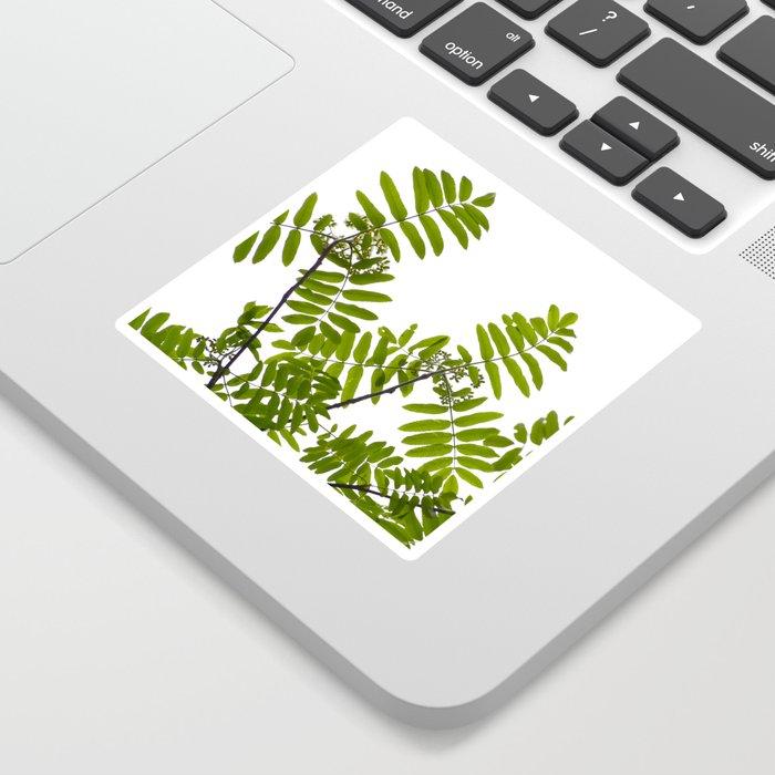 Green Rowan Leaves White Background  Sticker