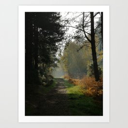 Forest Path in Fall Art Print