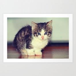 Milo The Kitty Art Print