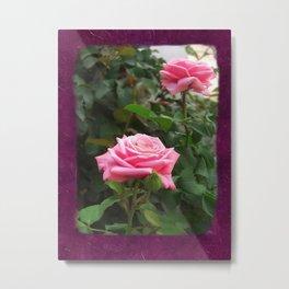Pink Roses in Anzures 5  Blank P8F0 Metal Print