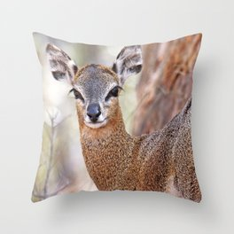 Klipspringer, Africa wildlife Throw Pillow