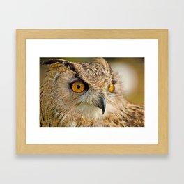 Bengal Owl Framed Art Print