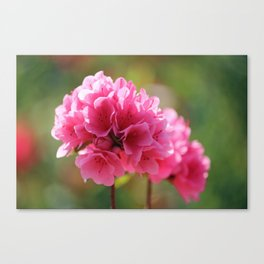 Pink Is The Color Canvas Print